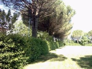 alberism